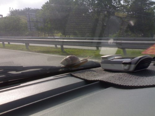 Later it moved from left to the right side of the windscreen and started to climb.